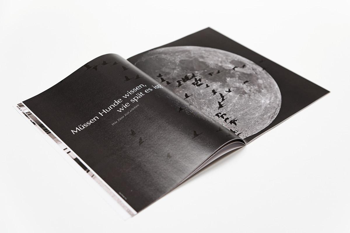 Gestaltung einer Magazindoppelseite für die Zeitschrift aviso als Hingucker.